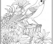 Coloriage Animaux Zen facile