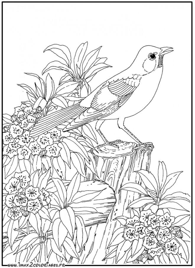 Coloriage animaux zen facile dessin gratuit imprimer - Image zen a imprimer ...
