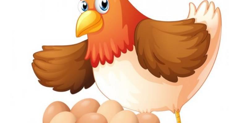 L'œuf de la poule