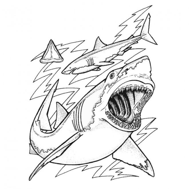 Coloriage skylanders requins dessin gratuit imprimer - Coloriage de requin a imprimer gratuit ...
