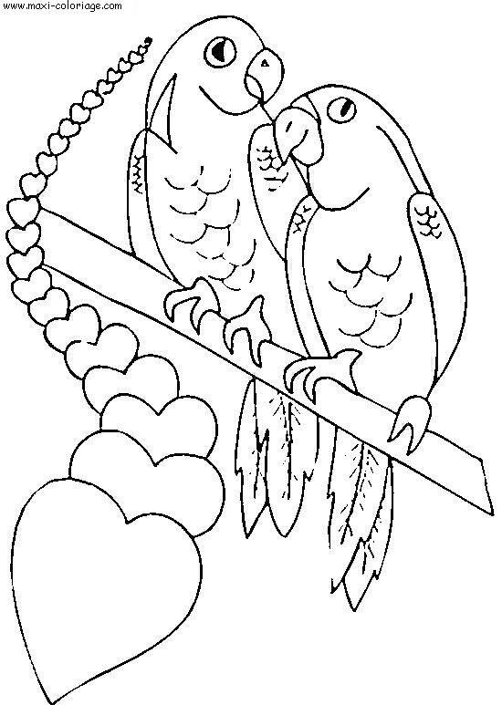 Coloriage et dessins gratuits Couple Perroquets St-Valentin à imprimer