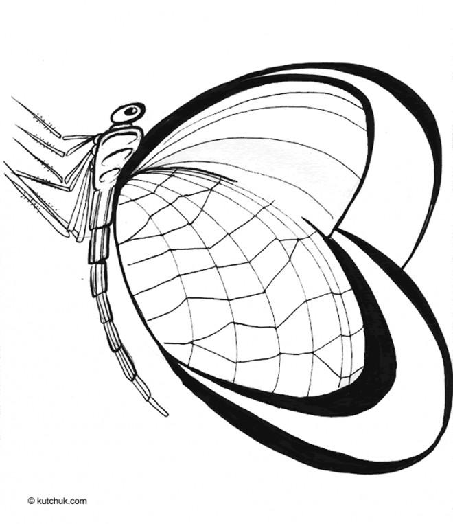 Coloriage et dessins gratuits St-Valentin Papillon stylisé à imprimer