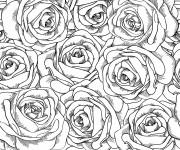 Coloriage et dessins gratuit Adulte Fleurs et leurs Pétales à imprimer