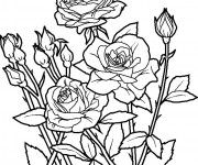 Coloriage Fleurs au début de Printemps