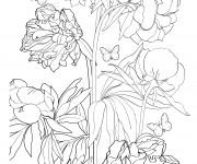 Coloriage et dessins gratuit Adulte Fleur et Papillon à imprimer