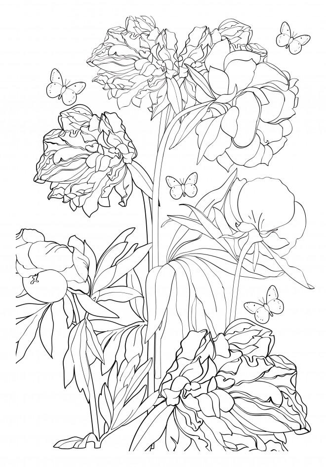 Coloriage et dessins gratuits Adulte Fleur et Papillon à imprimer