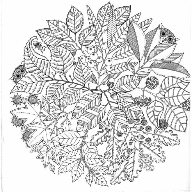 Coloriage Adulte Jardin Et Nature Dessin Gratuit à Imprimer