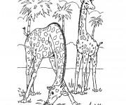 Coloriage et dessins gratuit Adulte Paysage de Girafes en Afrique à imprimer