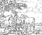 Coloriage et dessins gratuit Adulte Paysage La Nature à imprimer