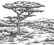 Coloriage et dessins gratuit Adulte Paysage La Savane à imprimer