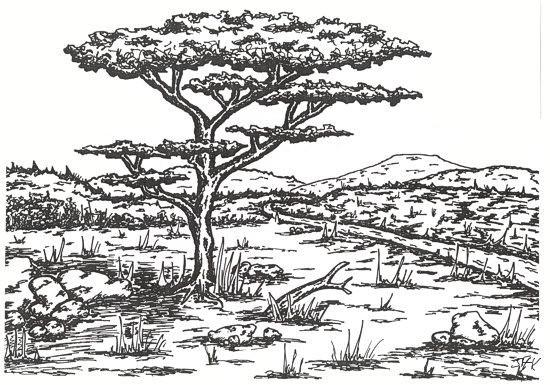 Coloriage adulte paysage la savane dessin gratuit imprimer - La savane dessin ...