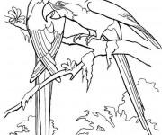 Coloriage et dessins gratuit Paysage de Perroquets à imprimer