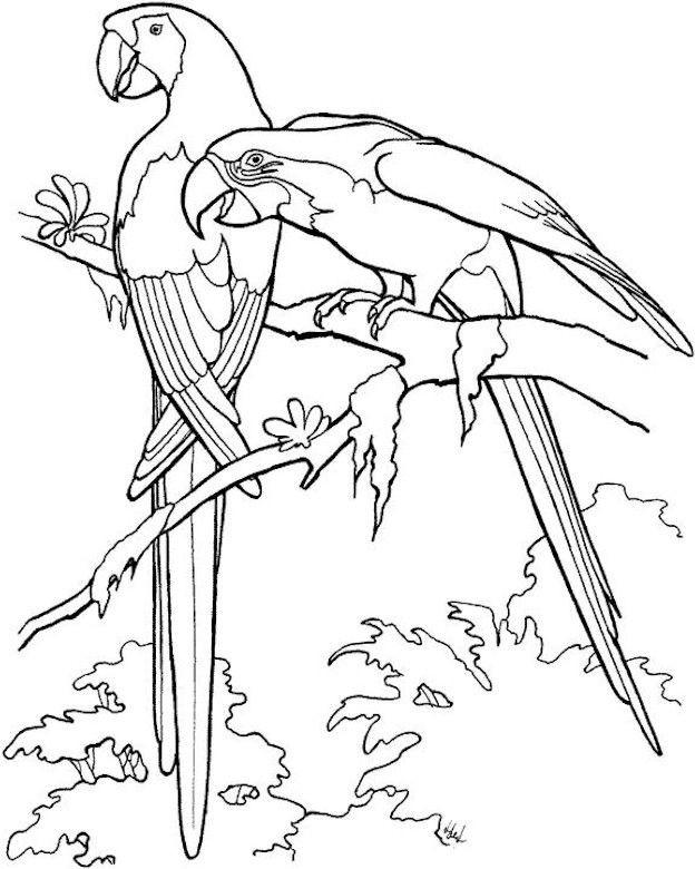 Coloriage et dessins gratuits Paysage de Perroquets à imprimer