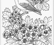 Coloriage et dessins gratuit Paysage Oiseaux à imprimer