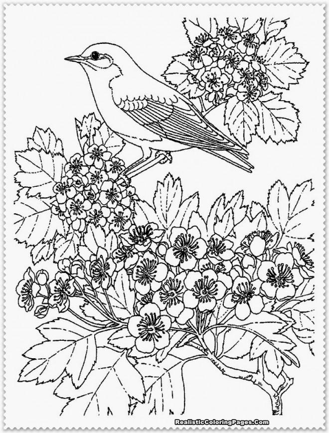 Coloriage et dessins gratuits Paysage Oiseaux à imprimer