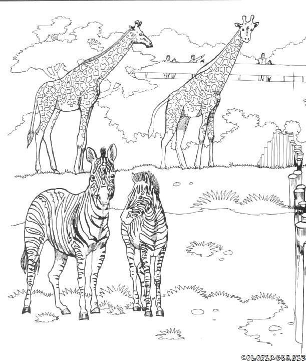 Coloriage et dessins gratuits Animaux africains dans le Zoo à imprimer