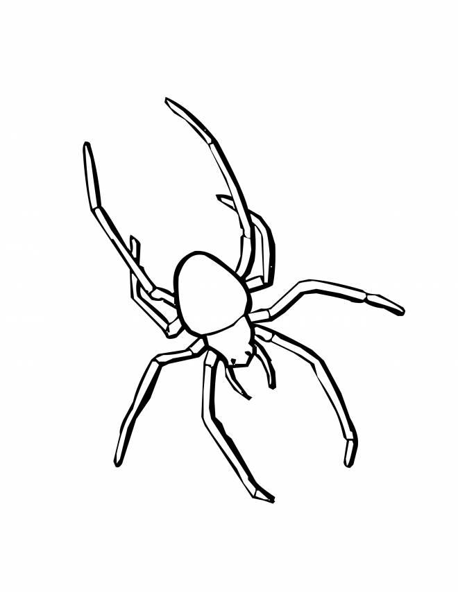 Coloriage et dessins gratuits Araignée veuve noire à imprimer