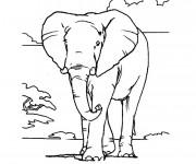 Coloriage et dessins gratuit Éléphant en Afrique à imprimer