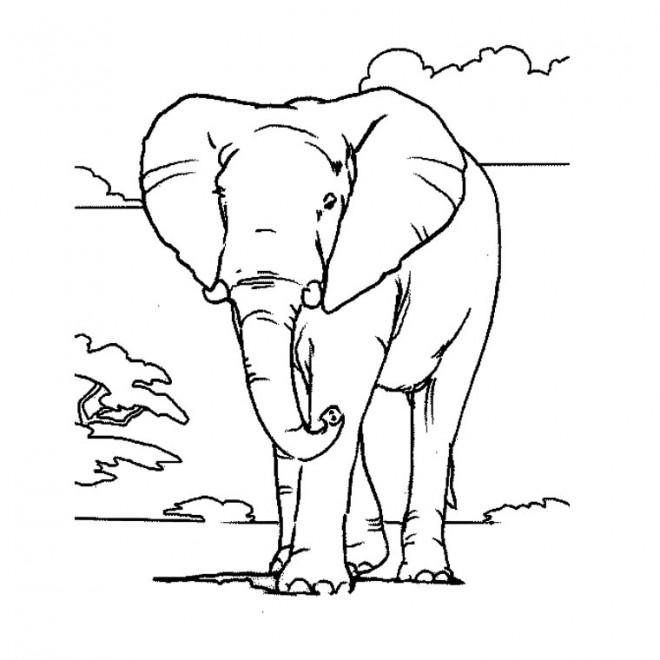 Coloriage et dessins gratuits Éléphant en Afrique à imprimer