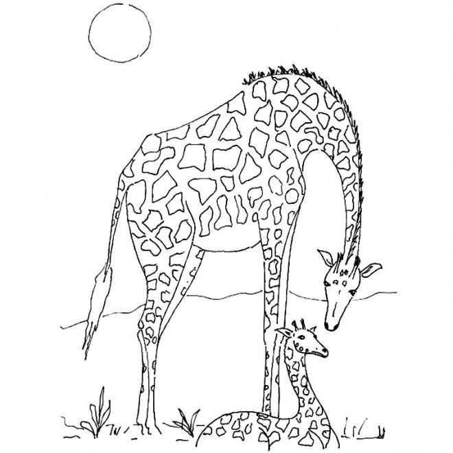 Coloriage girafe d 39 afrique dessin gratuit imprimer - Coloriage d afrique ...
