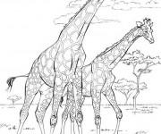 Coloriage et dessins gratuit La Savane Africaine réaliste à imprimer