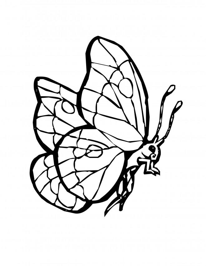 Coloriage Papillon vecteur dessin gratuit à imprimer