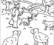 Coloriage Les moutons de ferme