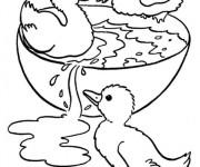 Coloriage Petits Canards de Ferme