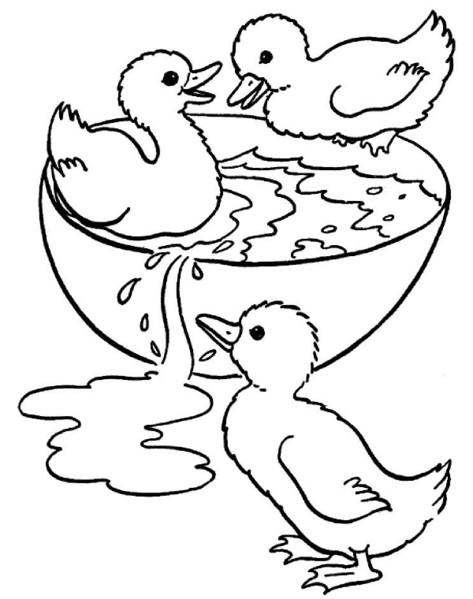 Coloriage et dessins gratuits Petits Canards de Ferme à imprimer