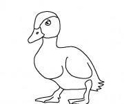 Coloriage et dessins gratuit Un Canard simple à imprimer