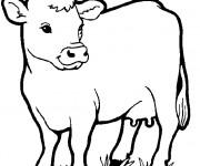 Coloriage Vache de Ferme vectoriel