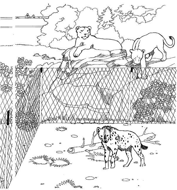 Coloriage et dessins gratuits Animaux d'Afrique en captivité à imprimer