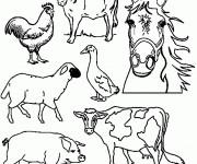 Coloriage dessin  Animaux de Ferme 43