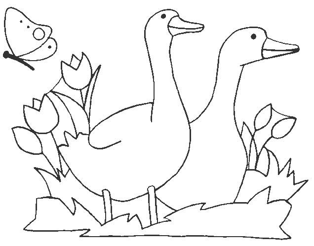 Coloriage et dessins gratuits Animaux et Nature en couleur à imprimer
