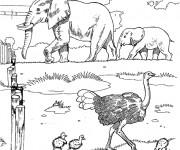 Coloriage et dessins gratuit Eléphants et autruche au Zoo à imprimer