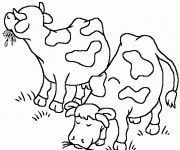 Coloriage et dessins gratuit Les Vaches en mangeant à imprimer