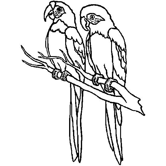 Coloriage et dessins gratuits Oiseaux exotiques à découper à imprimer