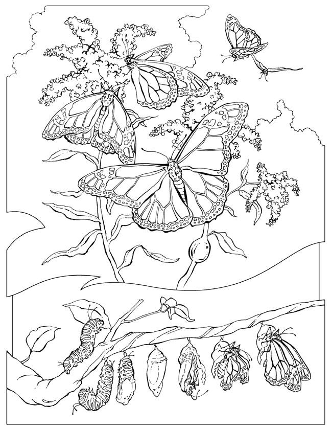 Coloriage et dessins gratuits Papillons multicolore en plein air à imprimer