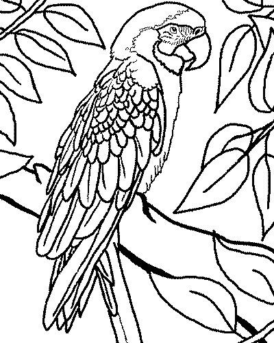 Coloriage Perroquet Sur L Arbre Dessin Gratuit A Imprimer
