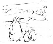 Coloriage et dessins gratuit Phoques et Pingouins à imprimer