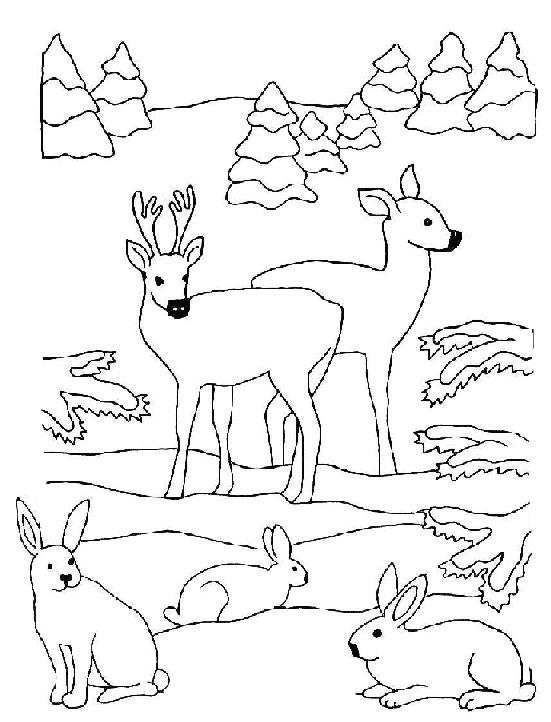 Coloriage et dessins gratuits Animaux de Forêt à télécharger à imprimer