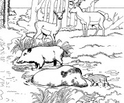 Coloriage et dessins gratuit Animaux de La Forêt au Zoo à imprimer