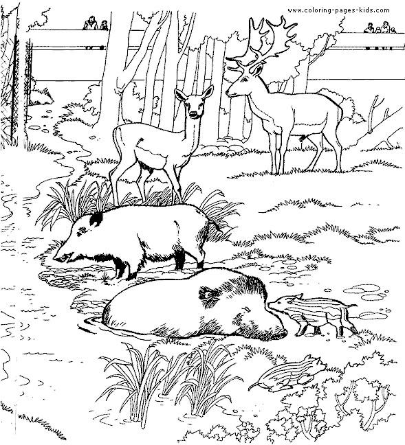 Coloriage Animaux Foret Imprimer.Coloriage Animaux De La Foret Au Zoo Dessin Gratuit A Imprimer