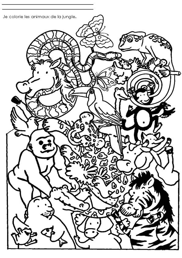 Coloriage Animaux De La Jungle Dessin Gratuit A Imprimer
