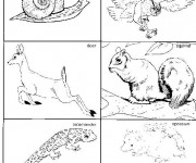Coloriage dessin  Animaux Foret 16