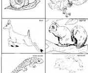 Coloriage et dessins gratuit Animaux Forêt classés à imprimer
