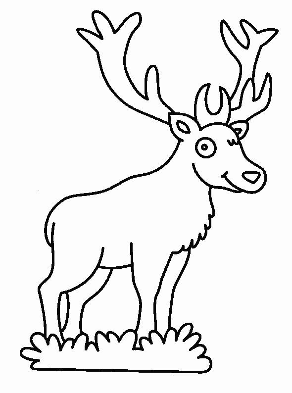 Coloriage et dessins gratuits Cerf dans La Forêt facile à imprimer