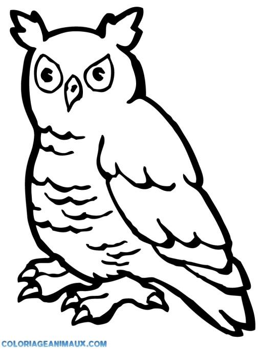 Coloriage et dessins gratuits Hibou de La Forêt vectoriel à imprimer