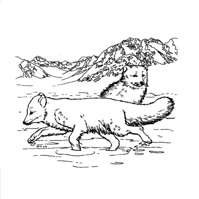 Coloriage et dessins gratuits Les Loupe dans La Montagne à imprimer