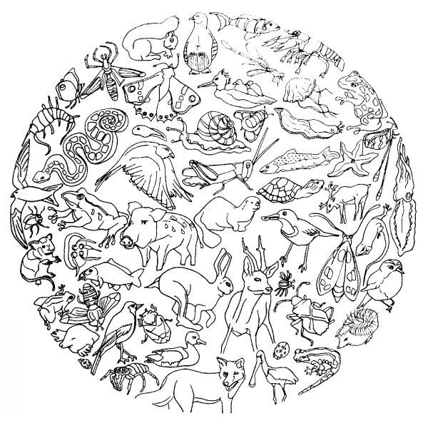 Coloriage Animaux mandala dessin gratuit à imprimer